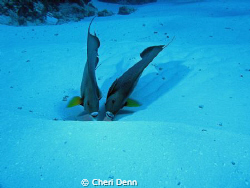 """Shadow""  Taken on the palacar reef, Cozumel, MX by Cheri Denn"